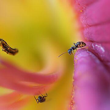 Ants by JamieP