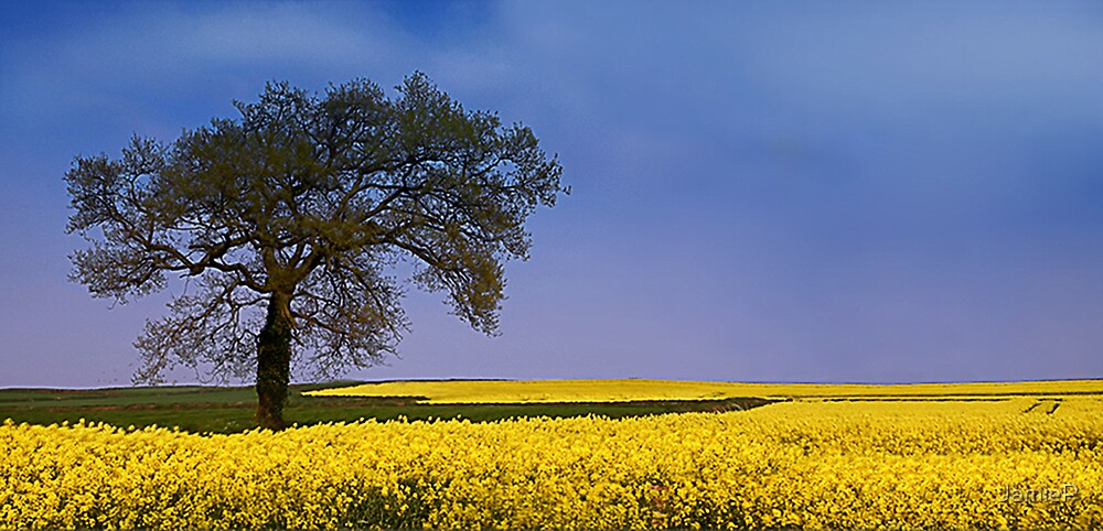 Oil-seed Rape Fields by JamieP