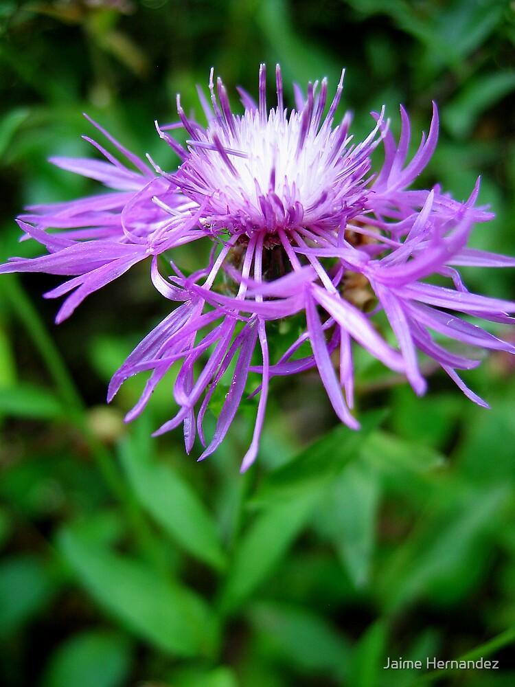Purple Beauty by Jaime Hernandez