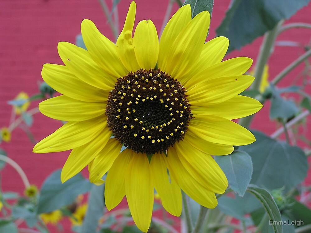 Sunny Flower by EmmaLeigh