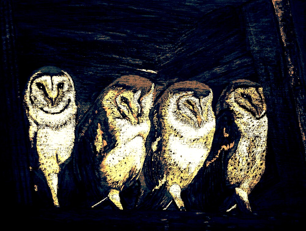 Resting owls by Carolyn