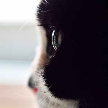 Cat eye by CarburoMetalico
