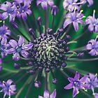 cuban lily by alan shapiro