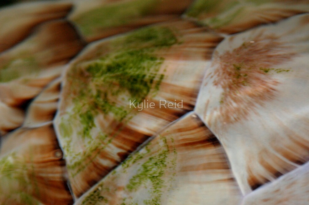 Turtle Shell 2 by Kylie Reid