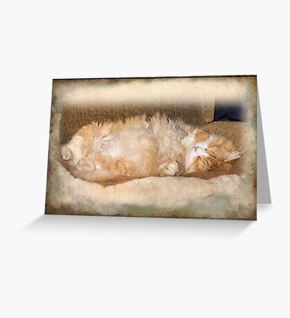 BobCat Asleep Greeting Card