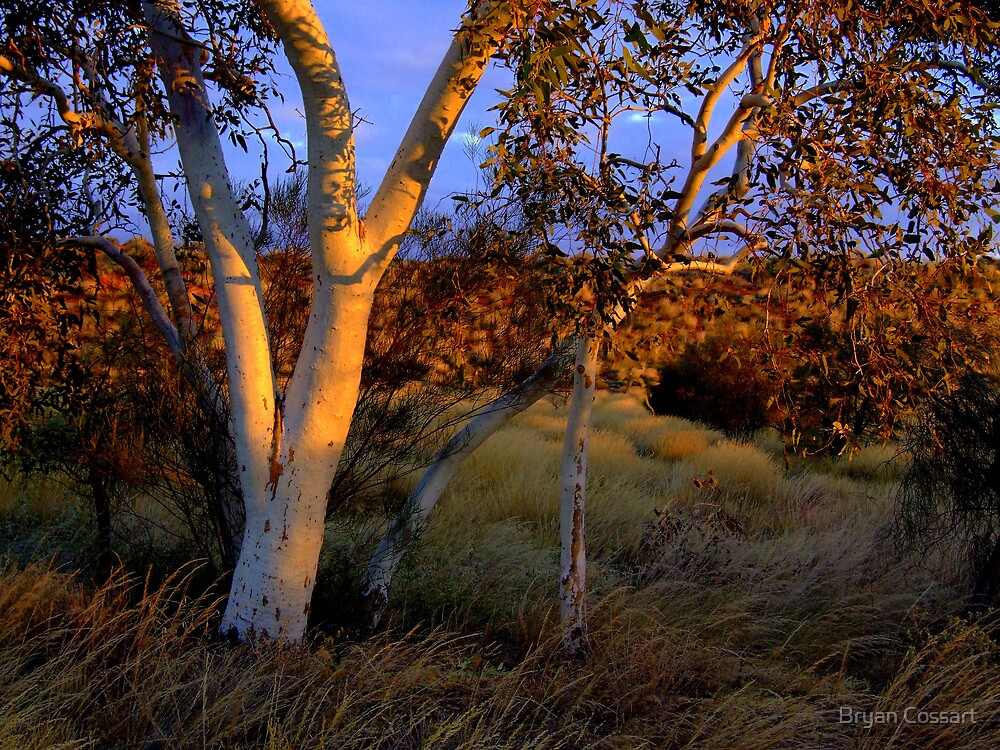 Trees at sunset by Bryan Cossart