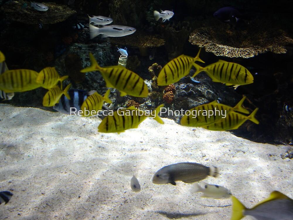 Yellow Fish by Rebecca Garibay Photography