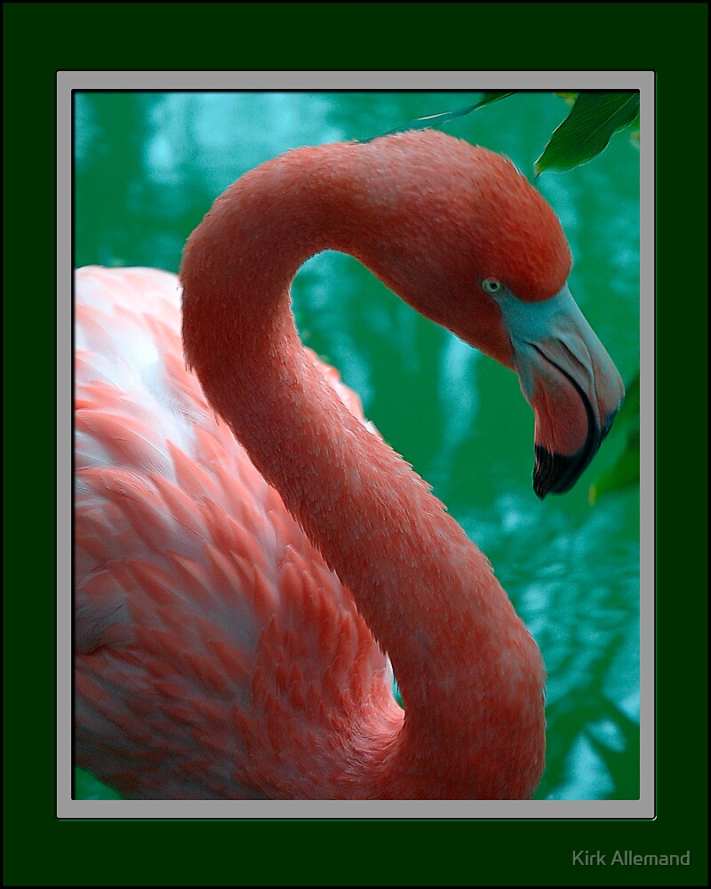 Flamingo with Frame by Kirk Allemand
