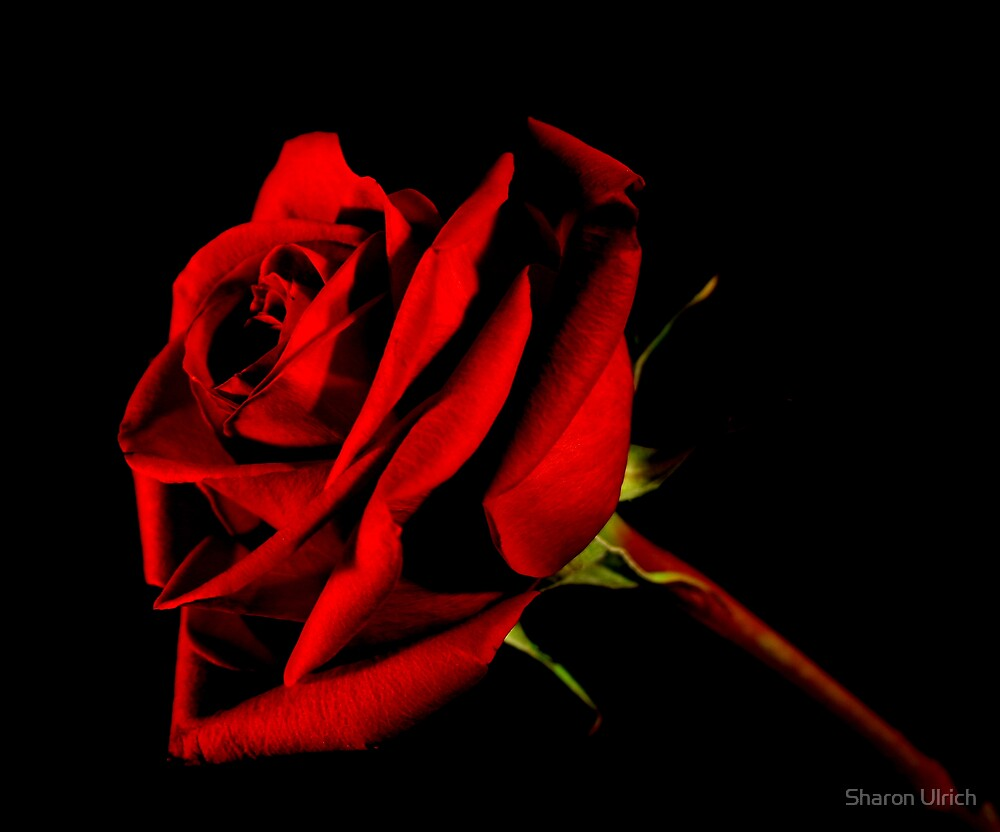 Roses are Red by Sharon Ulrich