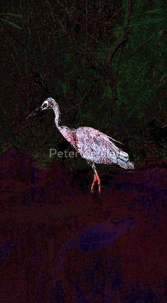 Heron in the Creek, Kananook 2007 by Peter Kewley