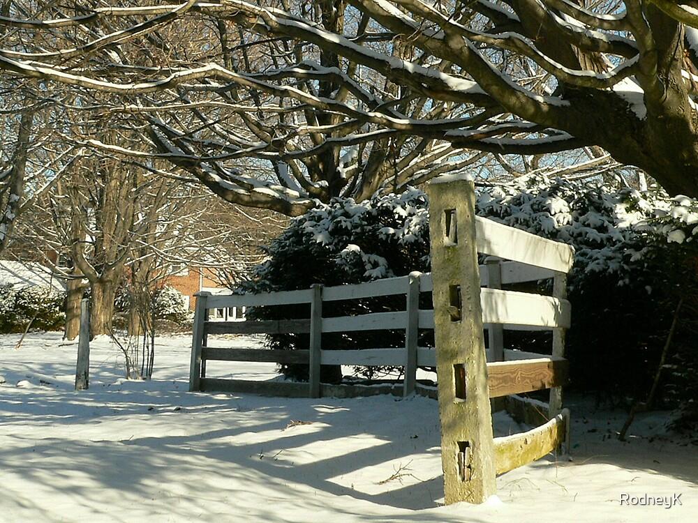Winter's Wonder by RodneyK