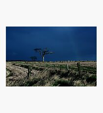 Rihanna Tree, County Down Photographic Print
