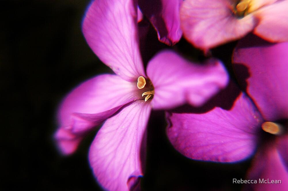 softly softly II by Rebecca McLean