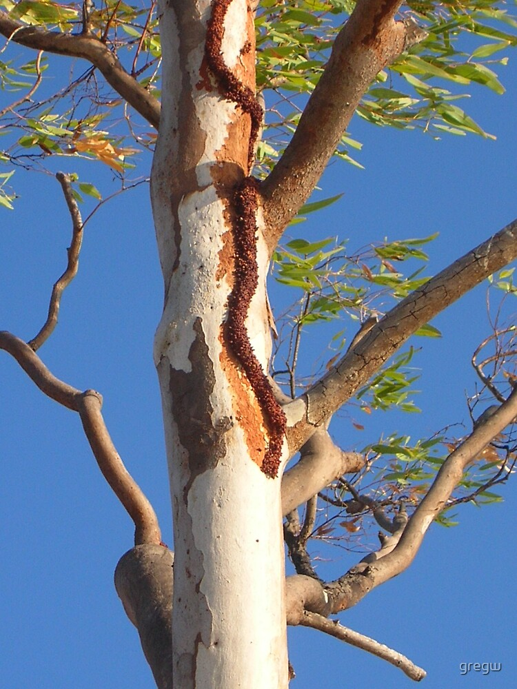 White Ants??  Northern Territory, Australia by gregw