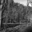 Old Hops Field, Tasmania by BRogers