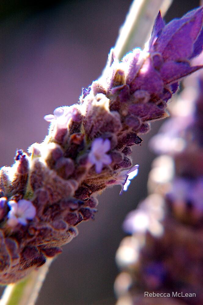 lavendar by Rebecca McLean