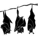 Three bats by Matt Mawson