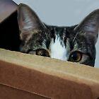 Peek-a-Boo, I See You!  by Heather Friedman