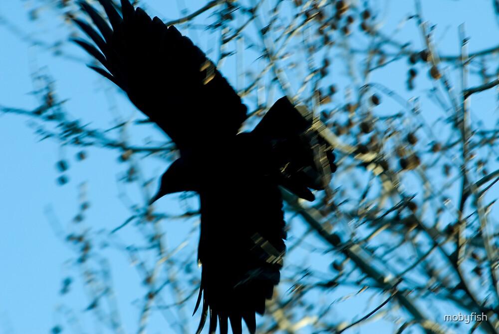spread eagle by mobyfish
