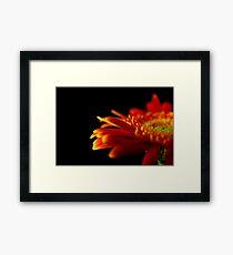 Crizanteme Framed Print