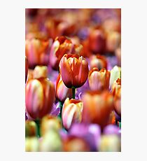 Standing Out In A Crowd Photographic Print