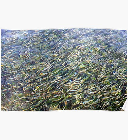 Sea Grass Through Rippling Water Poster