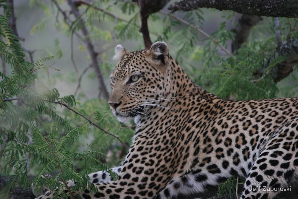 Leopard In Tree by Jeff Zaboroski