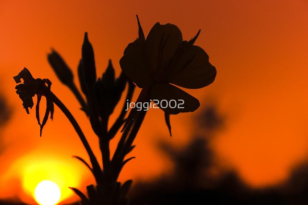 Evening Glow by joggi2002