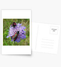 Cinnebar moths Postcards
