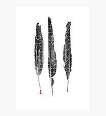 The Writer's Feathers Photographic Print