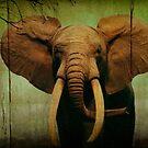 Elephant On Wooden Bkgrd 24x36 by Larry Costales