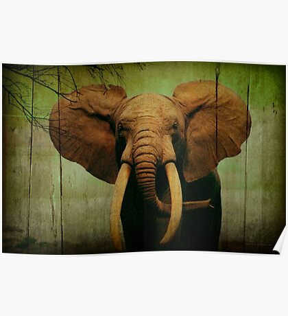 Elephant On Wooden Bkgrd 24x36 Poster