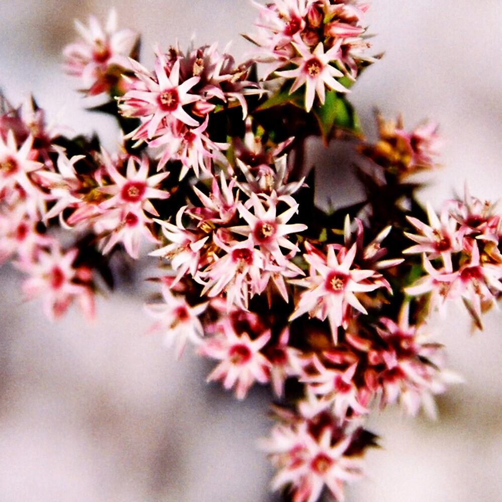Tasmanian Beauty II by bethgardner