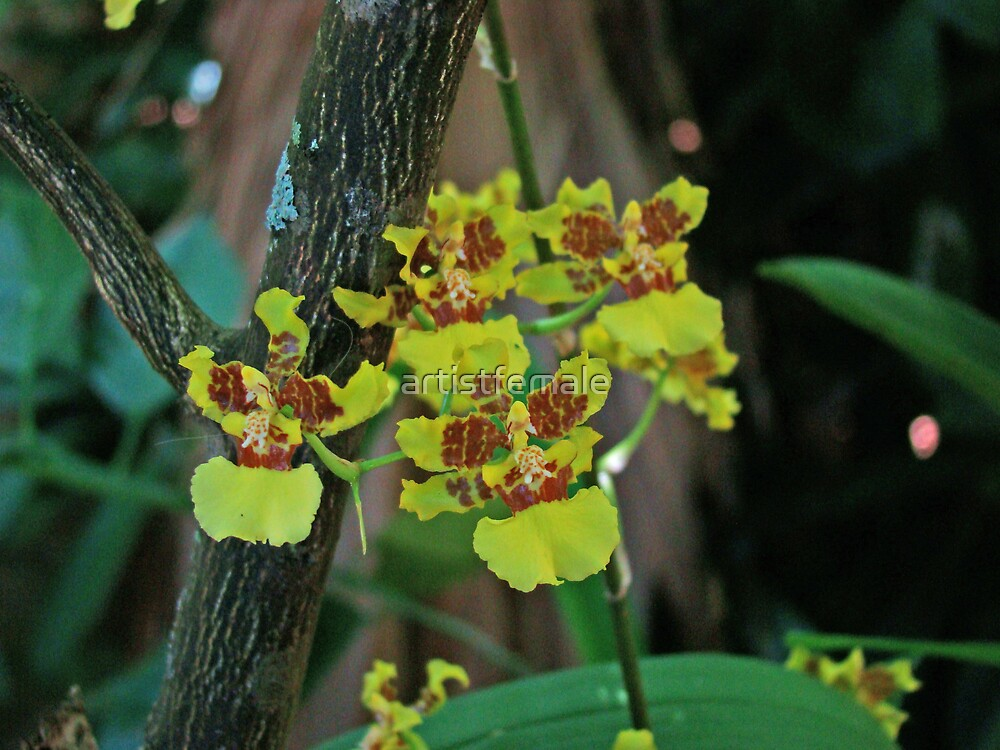 Yellow Orchid  by artistfemale