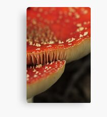 Toadstool detail Canvas Print