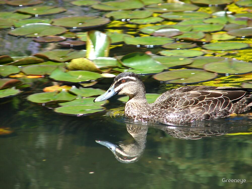 Refelctive Duck by Greeneye