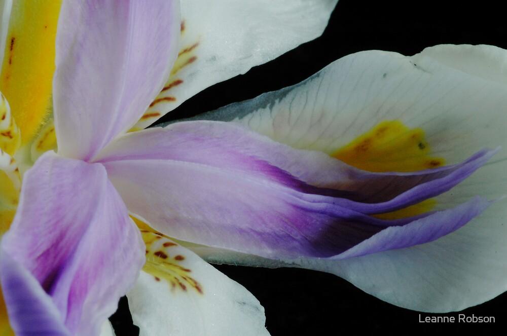 Iris by Leanne Robson