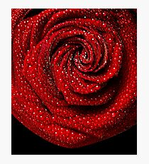 The red rose Photographic Print