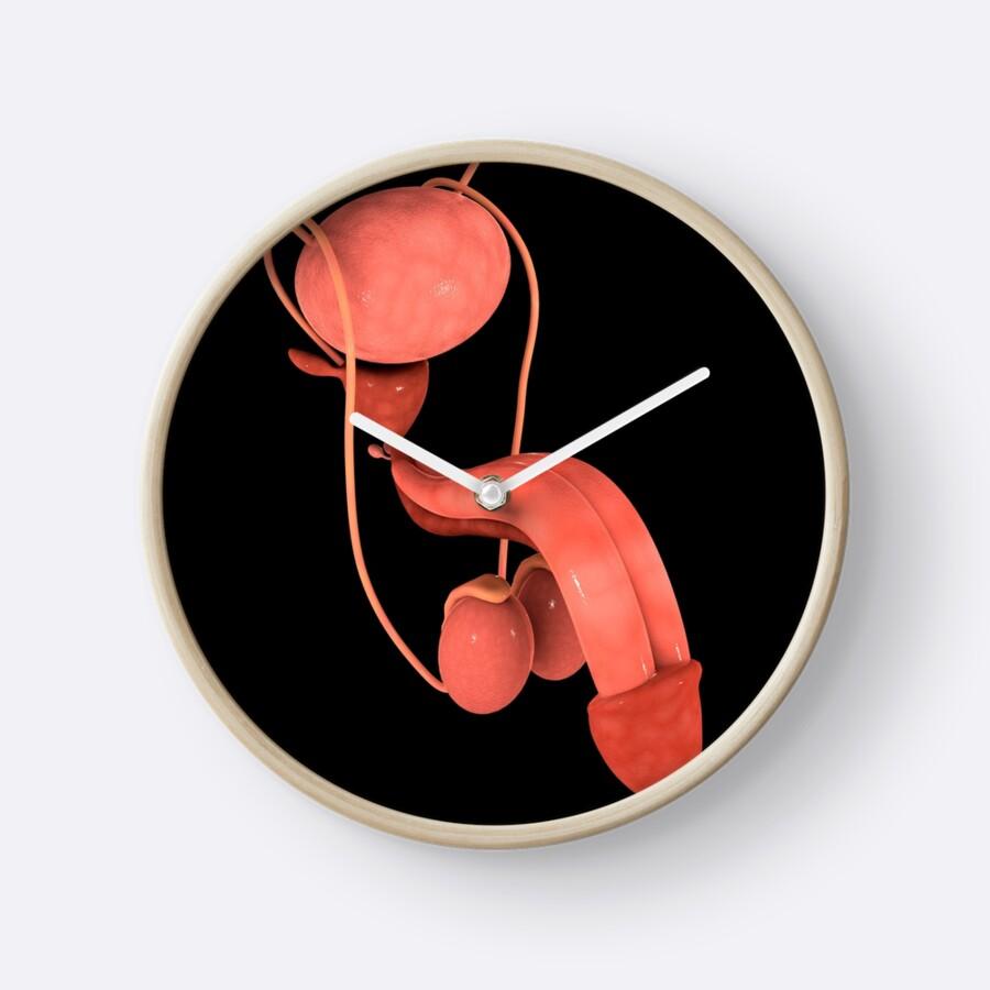 Lujo Reproductivos Humanos órganos Fotos Imágenes - Anatomía de Las ...