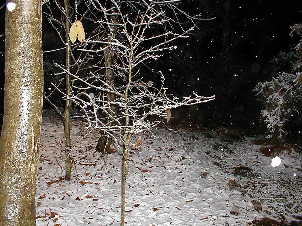 snowy day by dawnesha