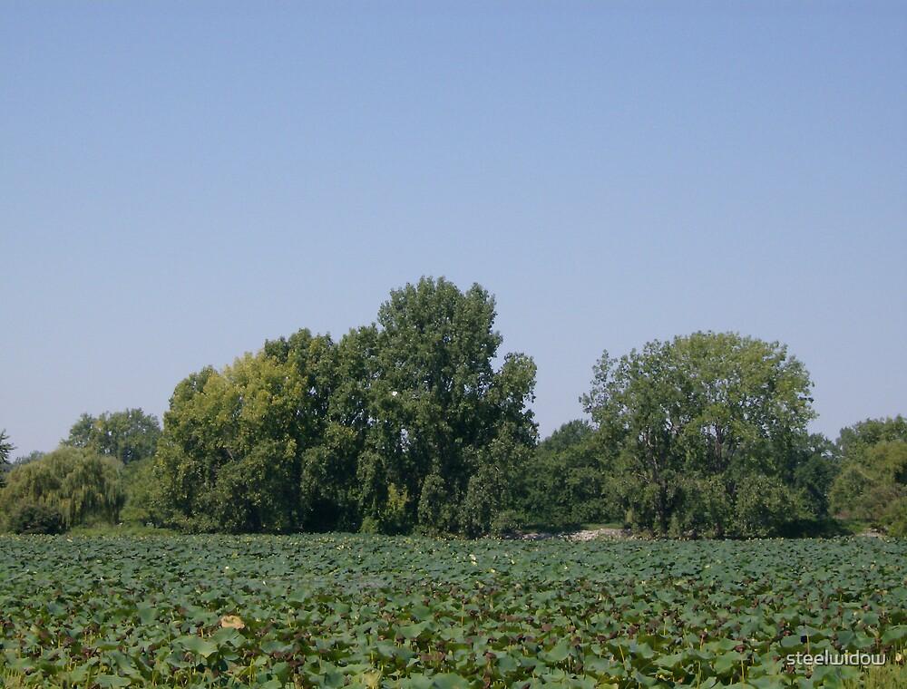 Summer pond with treeline by steelwidow
