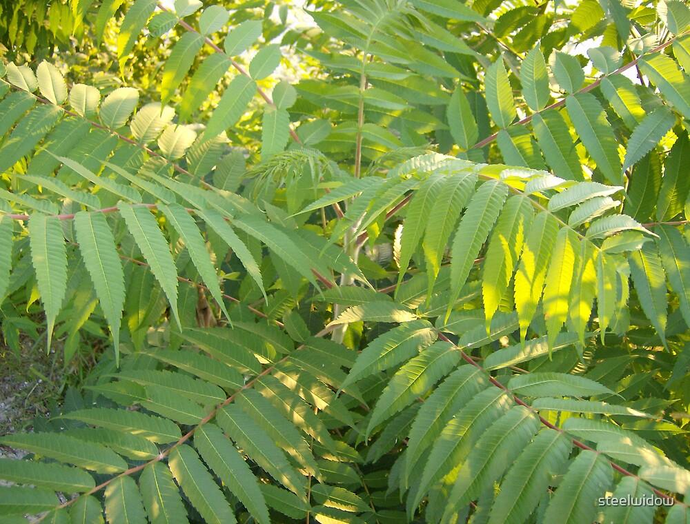 Green Fern Tree by steelwidow