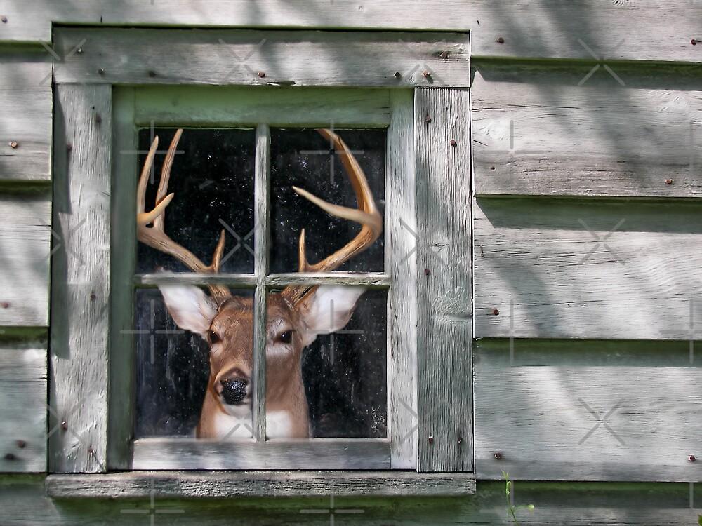 Deer Blind by Maria Dryfhout