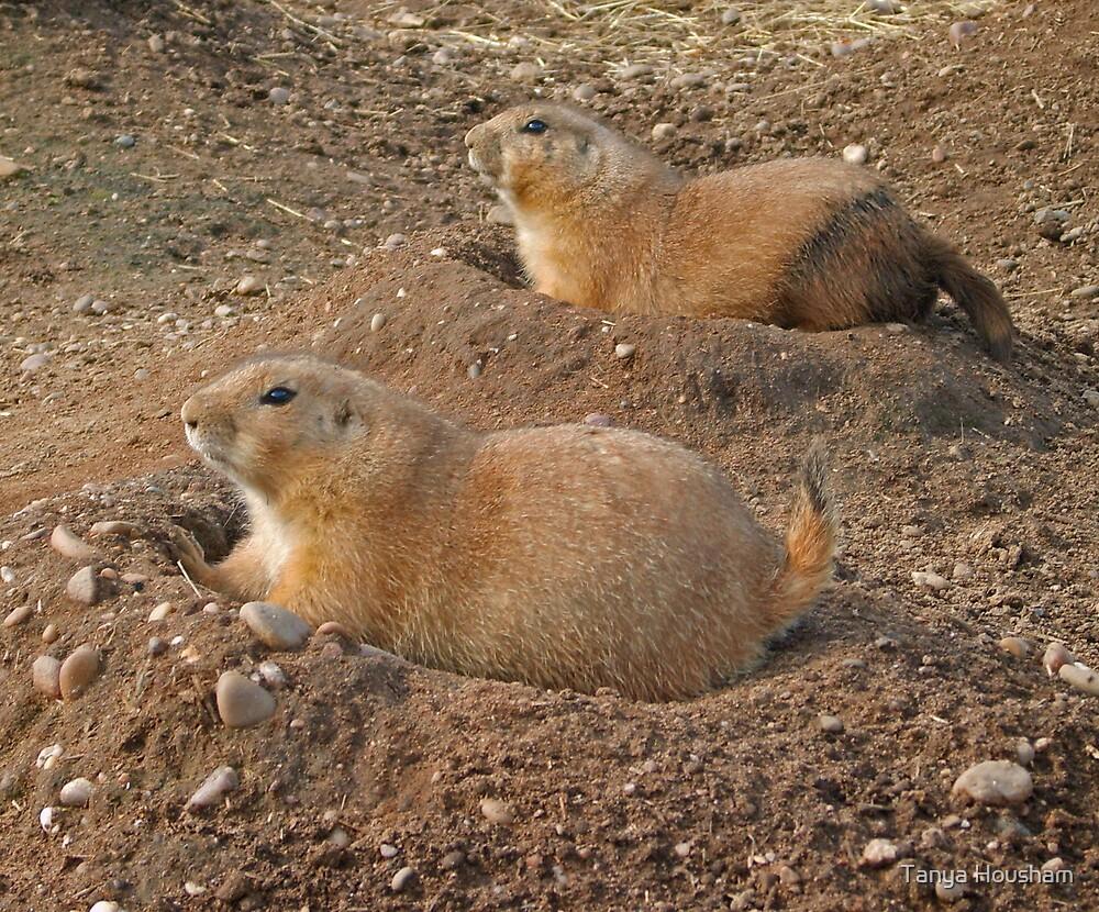 Prairie Dog duo by Tanya Housham