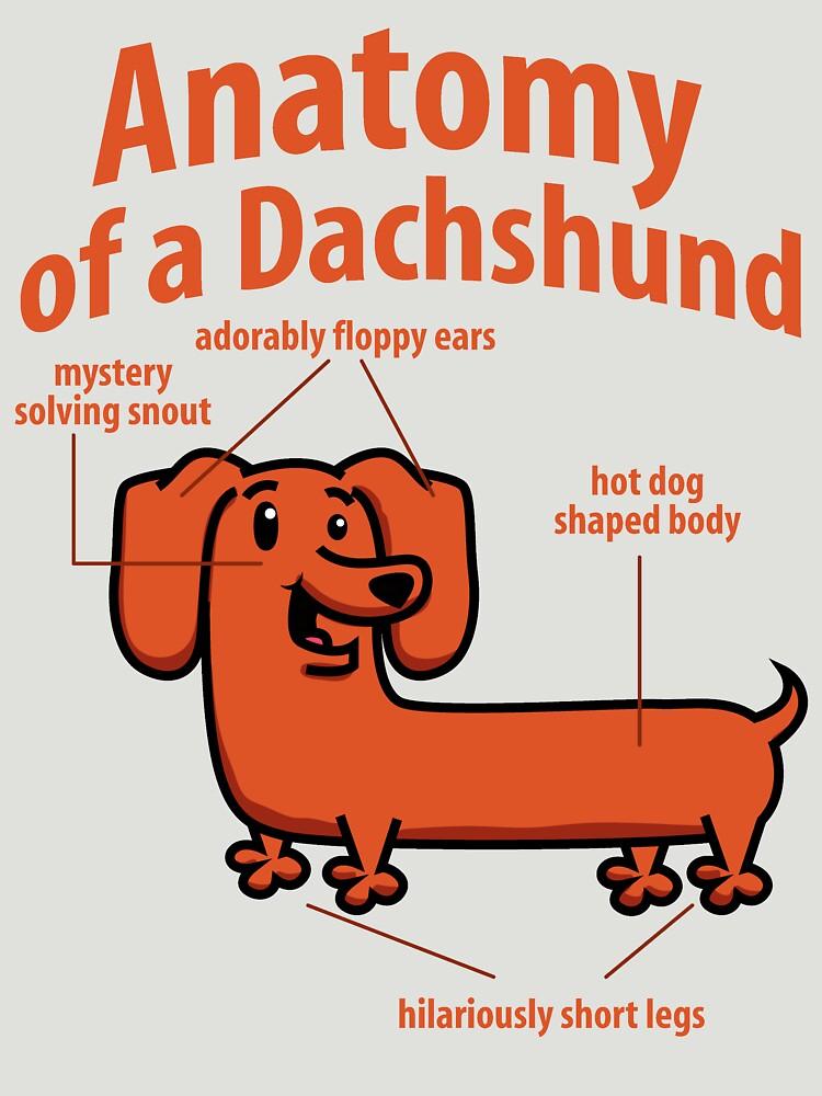 anatomy of a dachshund tshirts by bestdesign4u