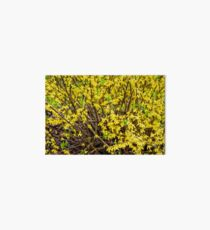 Tiny Yellow Flowers Art Board