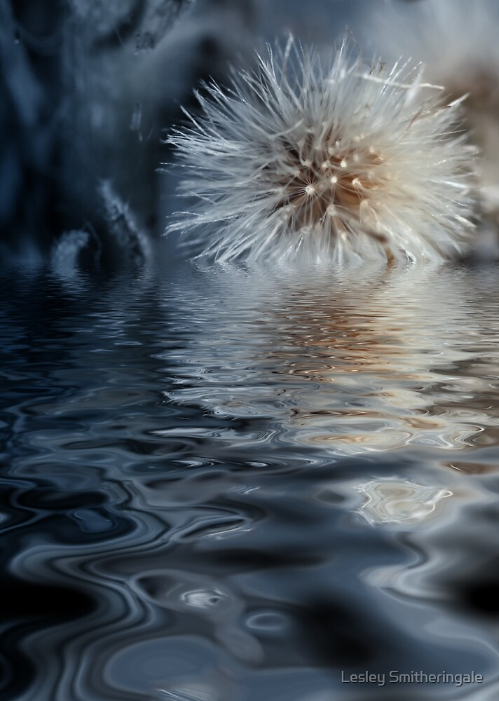 Dandelion Tears by Lesley Smitheringale