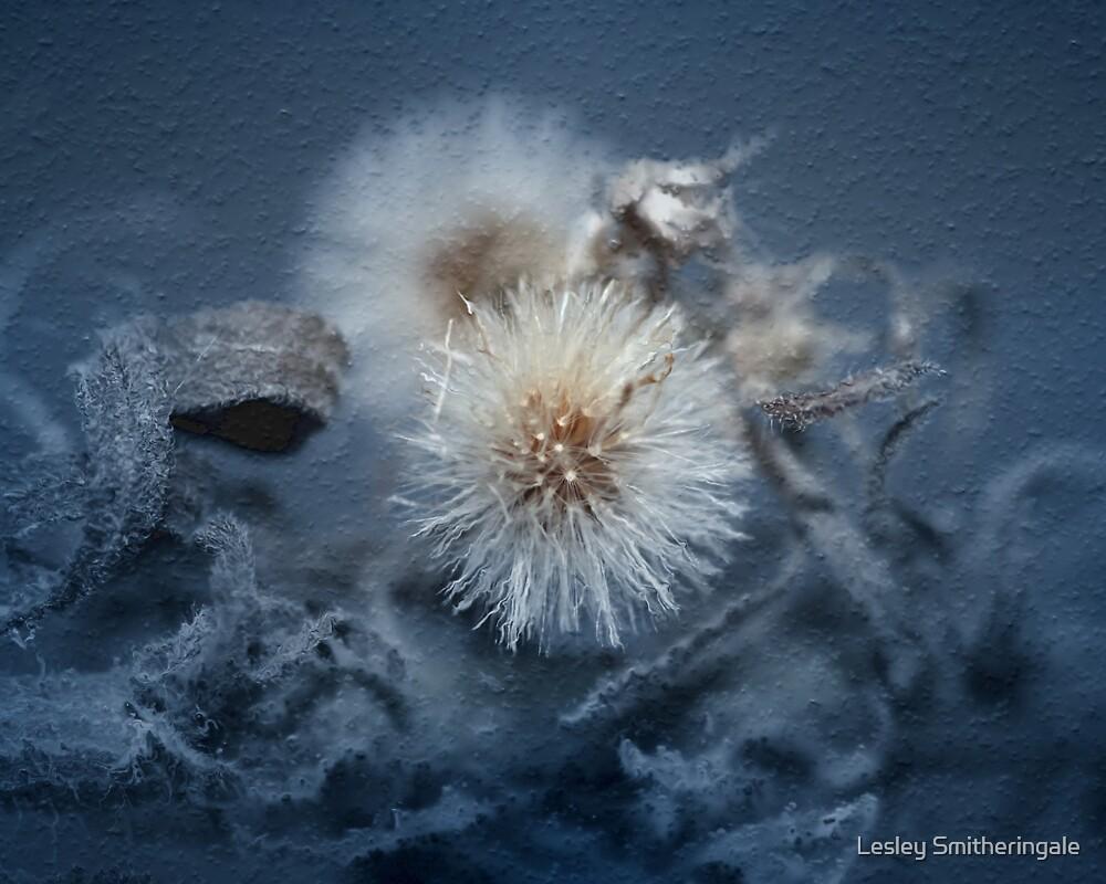 Dandelion Blues still-life by Lesley Smitheringale