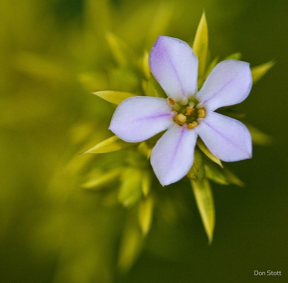 Spring flower by Don Stott