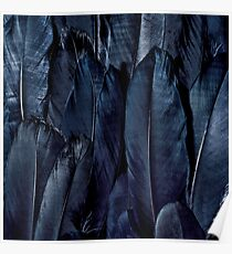 Black Feather Close Up  Poster
